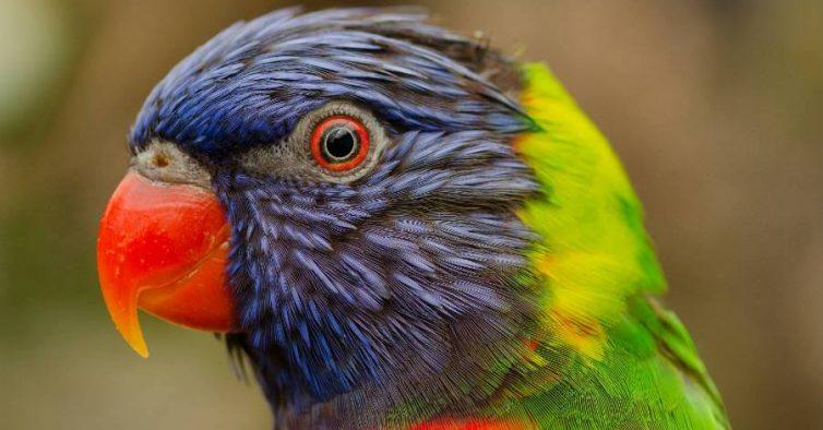 Populares Teatro Tivoli recebe mais de 100 animais exóticos - NiT XO42