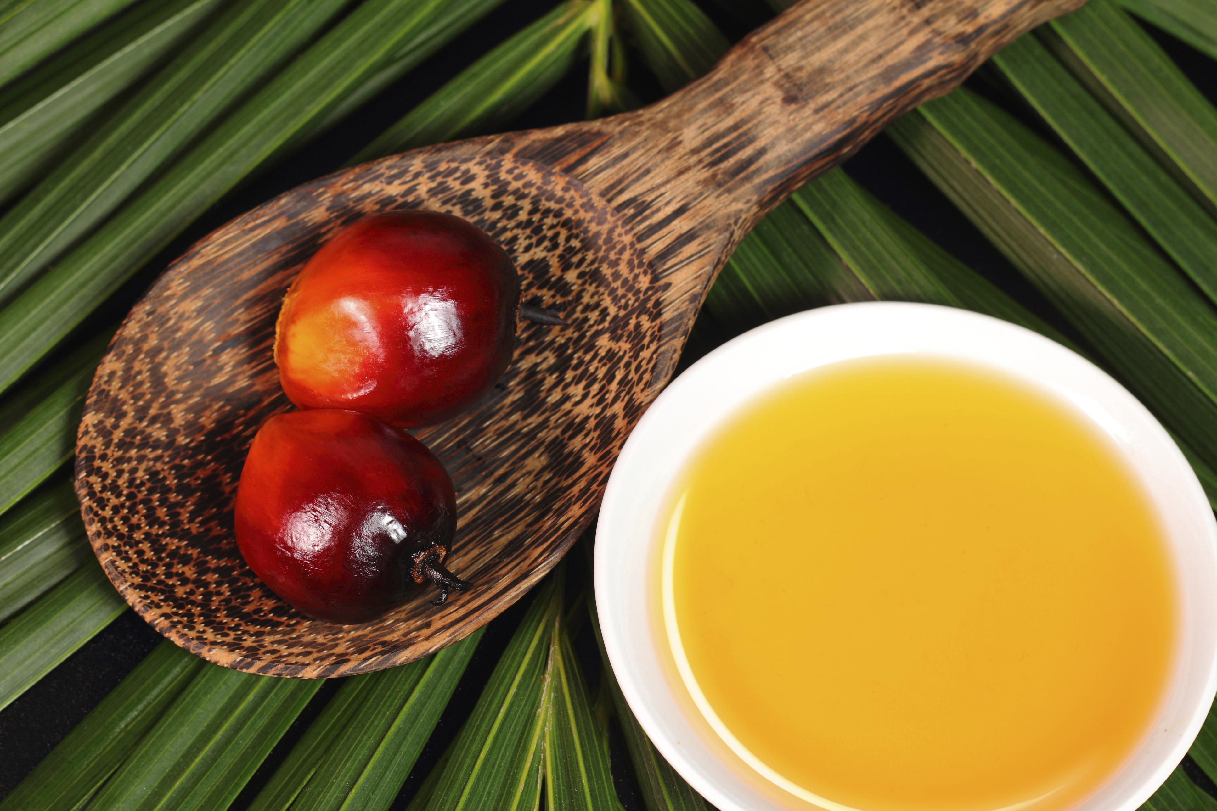 Resultado de imagem para Oleo de palma