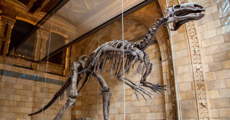 museu natural de londres