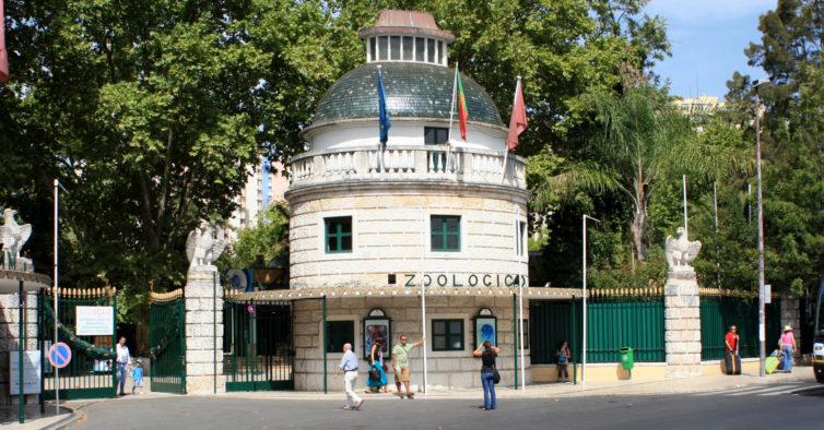 Zoo de Lisboa celebra mais um aniversário com três dias de festa