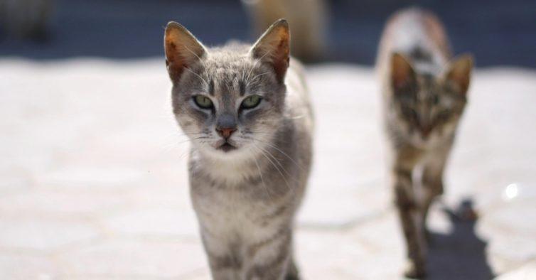 As ruas de Lisboa vão ter mais gatos — e é por um motivo de saúde pública