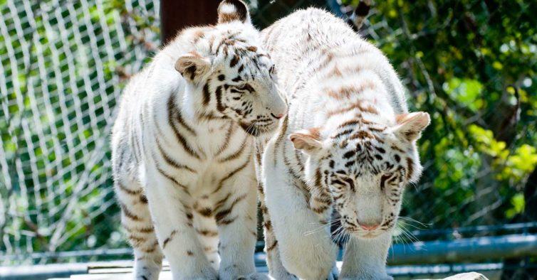Se visitar o zoo de Lisboa esta semana, vai ter ofertas, descontos e viagens à borla