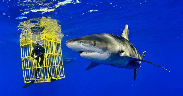 """""""Sharks"""": National Geographic tem uma nova exposição no Porto"""