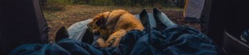 5 dicas para ter as férias perfeitas com o seu animal de estimação
