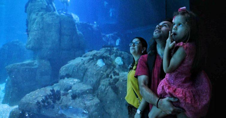 Oceanário recebeu 25 milhões de visitantes — e ofereceu uma viagem a uma família