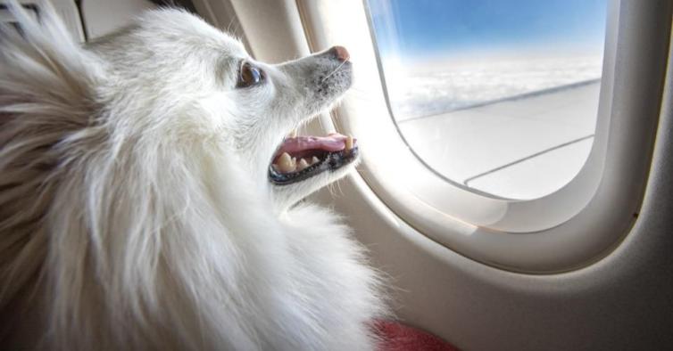 TAP Miles&Go Pets: Viaje com seu animal de estimação para ganhar mais milhas!