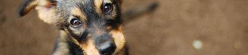 Associação suspende adoções para evitar que animais sejam presentes de Natal