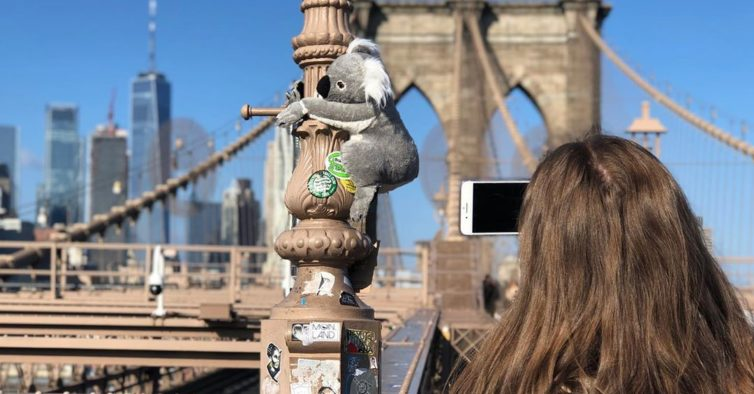 Coalas de peluche invadem Nova Iorque — estão em todo o lado e são um alerta