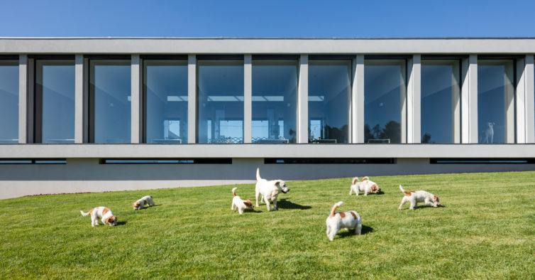 Este hotel para cães e gatos é tão luxuoso que até os donos vão querer ficar
