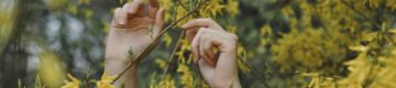 Vila Real vai plantar um milhão de árvores — já este ano