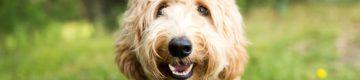 Peniche vai ter uma Cãominhada solidária (com cães à procura de dono)