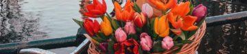 Amesterdão vive Dia Nacional da Tulipa — as fotos são lindas