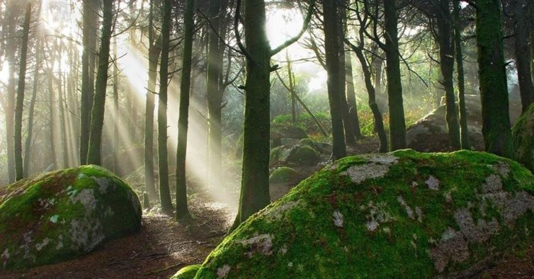 Há mais um passeio que o leva pela floresta encantada de Sintra