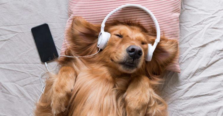 Spotify já tem playlists para os cães (e gatos) quando estão sozinhos em casa