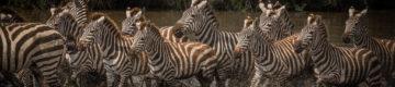 Um fotógrafo português capturou a beleza de África — as imagens são surreais