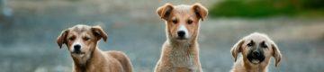 Este fotógrafo faz retratos de cães como se fossem pessoas para ajudar a adoção