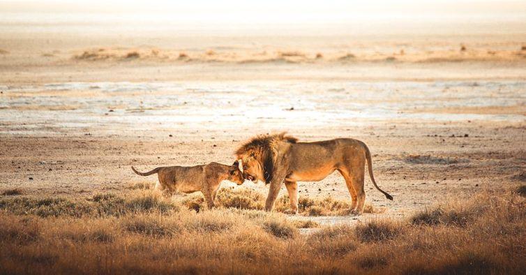 As incríveis fotografias de natureza que o vão ajudar a distrair-se da Covid-19