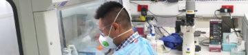 """Cientistas chineses encontram anticorpos """"eficazes"""" contra a Covid-19"""