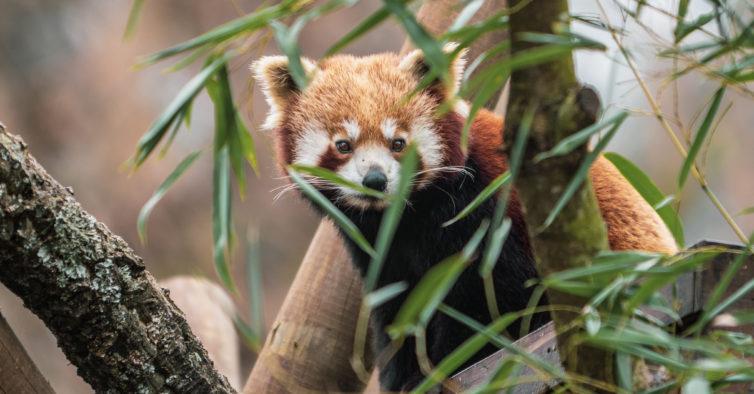 Zoo Santo Inácio sugere uma visita em família para celebrar o Dia da Criança