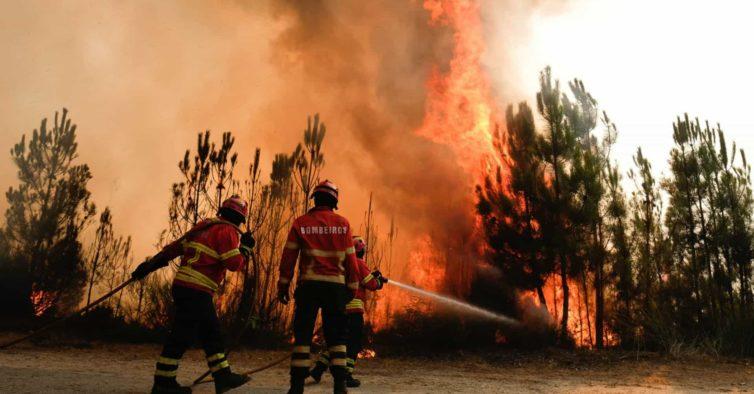 Temperaturas elevadas colocam 14 concelhos em risco muito elevado de incêndio
