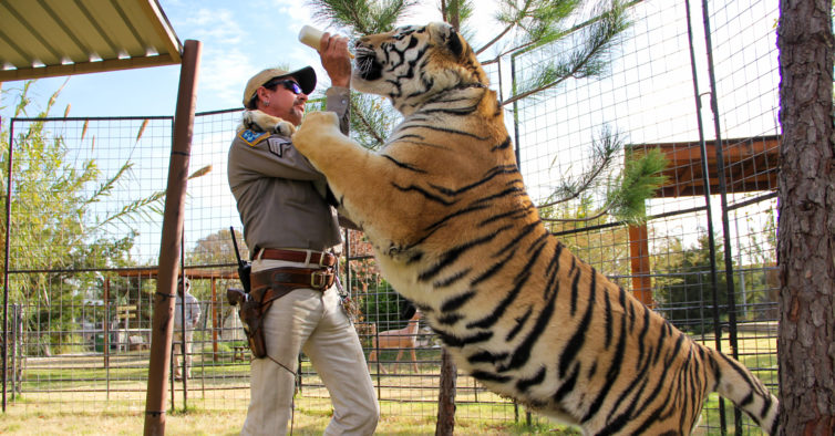 """Tiger King"" na vida real: Carole Baskin fica com o zoo de Joe Exotic"