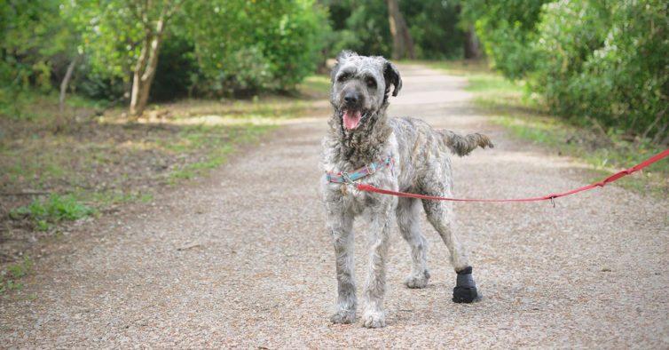 União Zoófila está à procura de voluntários para ajudar os animais