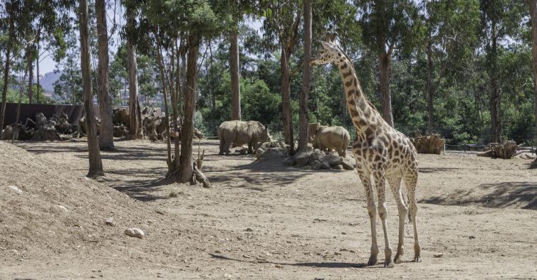 Zoo Santo Inácio celebra o 20.º aniversário com presentes para os visitantes