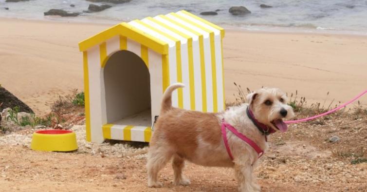 Já abriu nova praia para animais — e tem barraquinhas de praia para os cães