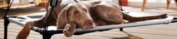Lidl volta a vender o famoso toldo para os cães não sofrerem com o calor