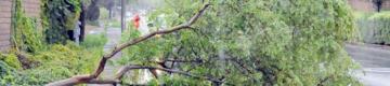 Tempestade com minitornado provoca queda de 100 árvores em Beja